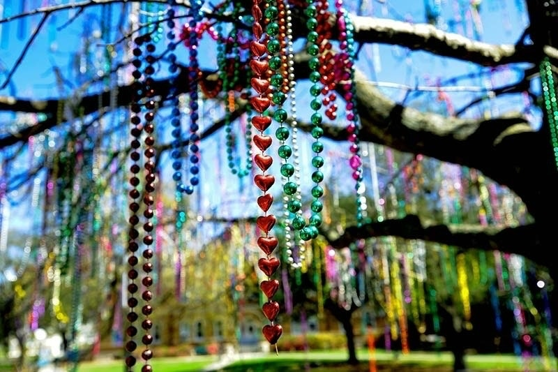 Colorful Mardi Gras beads hang from a large tree.